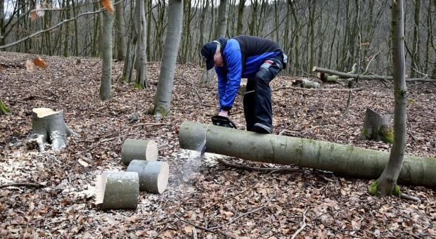 Wycinanie drzew przez rolnika poza kontrolą gminy