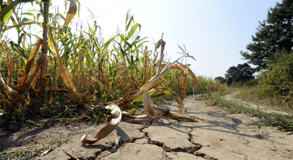 IUNG stwierdził pierwsze w sezonie występowanie suszy rolniczej