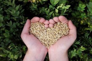 Jedna inspekcja dbająca o bezpieczeństwo żywności coraz bliżej