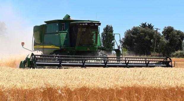 USA: Farmerzy ograniczyli zasiewy pszenic pod zbiory w 2017 r.
