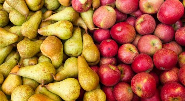 Ekspert: W tym roku mniejsze zbiory jabłek i gruszek