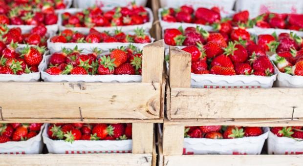 Jak kradzione truskawki… wpłynęły na spadek sprzedaży owoców