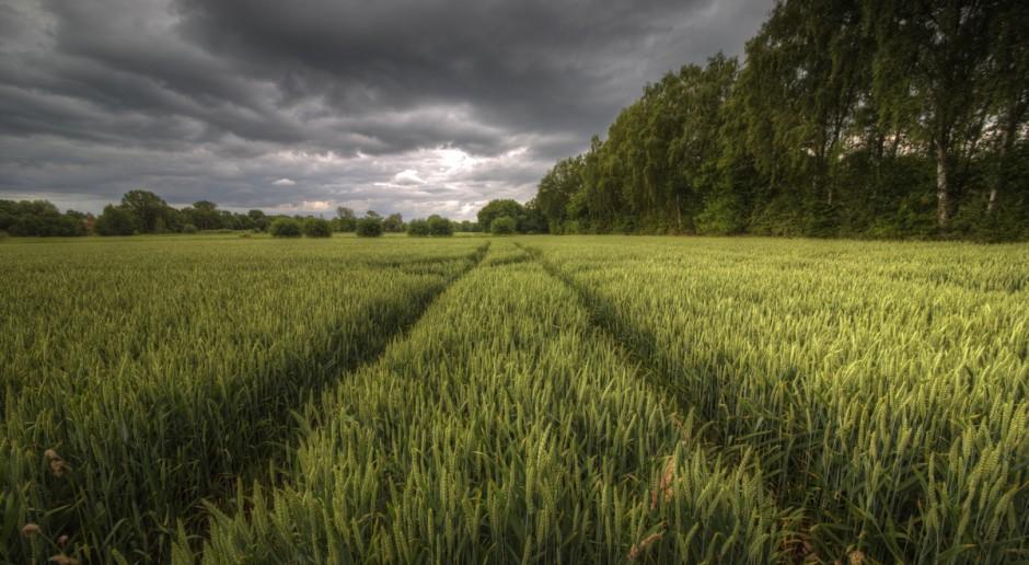 MRiRW: Rosną straty w rolnictwie