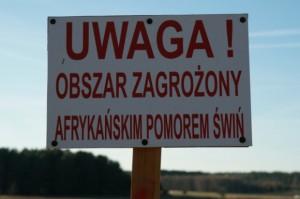 Pierwsze ognisko ASF w powiecie radzyńskim
