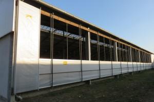Podczas upałów sprawdzają się obory z kurtynami bocznymi zamiast ścian