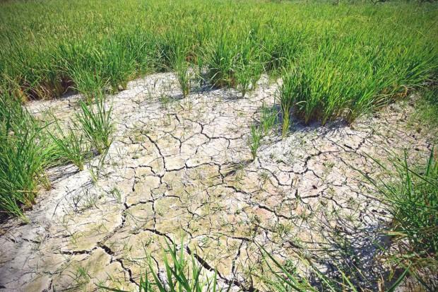 FAO: Najgorsza od lat susza grozi niedostatkiem żywności w Korei Płn.