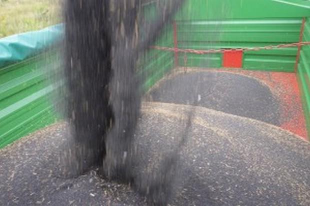 Rosja: Zebrano ponad 22 mln ton zbóż