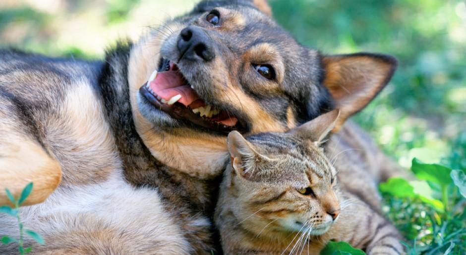 WHO: Bardzo małe ryzyko, by zwierzęta domowe mogły zarażać swoich właścicieli Covid-19