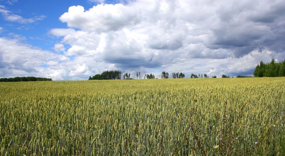 Rosja: Rozbieżności w szacunkach zbiorów zbóż