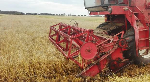 Śląskie i opolskie: jęczmień ozimy skoszony, przerwane żniwa rzepaczane