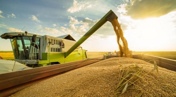 GUS: Zbiory zbóż w '17 wyniosą 27,5 mln ton, 8 proc. więcej niż w '16