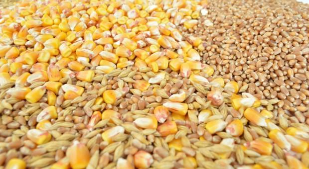 IGC: Lekka redukcja czerwcowej prognozy światowych zbiorów zbóż