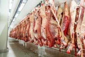 UE oczekuje lekkiego wzrostu produkcji wołowiny