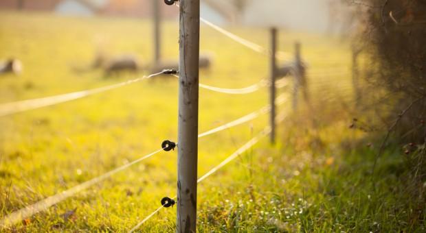 Czechy: Elektryczny płot wesprze walkę z afrykańskim pomorem świń