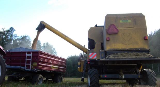 Centrum kraju: Trwają zbiory pszenicy ozimej, plony dobre do bardzo dobrych