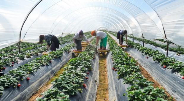 Francja: granice zamknięte, brakuje rąk do pracy w rolnictwie