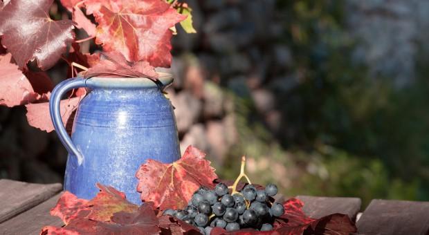 Deklaracje o rynku wina do końca sierpnia