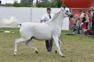 Święto Konia Arabskiego od piątku w Janowie Podlaskim