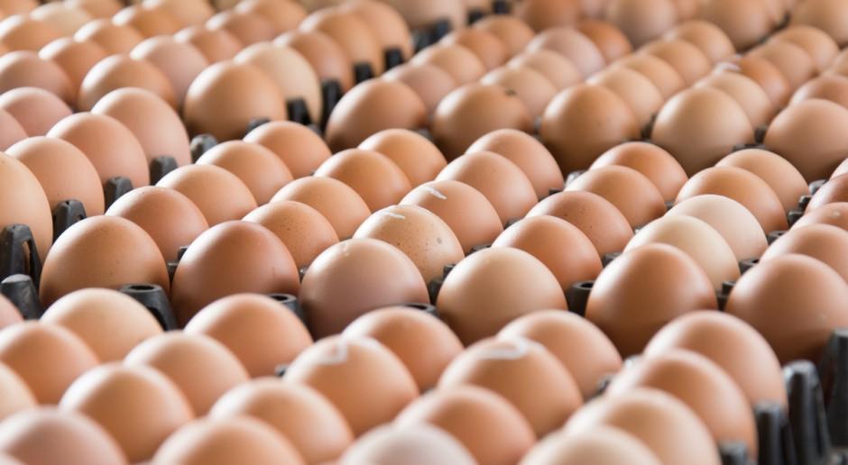 Polska korzysta na aferze ze skażonymi jajami