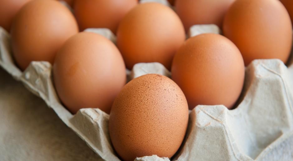 Na brytyjski rynek trafiło ok. 700 tys. jaj skażonych fipronilem