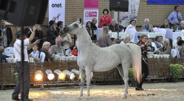 410 tys. euro za konie na aukcji Pride of Poland w Janowie Podlaskim