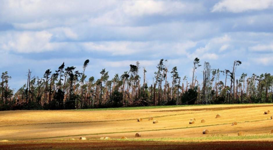 Lasy Państwowe: Połamane drzewa trafią na rynek w niższej cenie