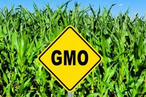 Po co nam III memorandum w sprawie GMO?
