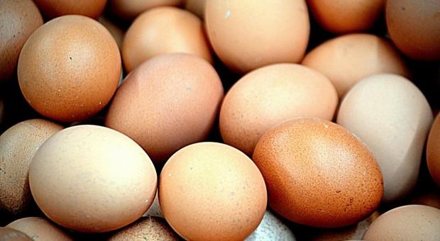Holandia: Jaja z fipronilem - straty hodowców drobiu szacowane na 150 mln euro