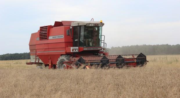 Producenci zbóż: Zebrano większość zbóż