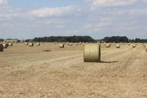 Jurgiel: Ponad 80 proc. żniw już się zakończyło; dobra cena pszenicy