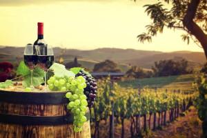 Francja: Winobranie rozpoczęte: zbiory będą mniejsze, ale jakość wysoka