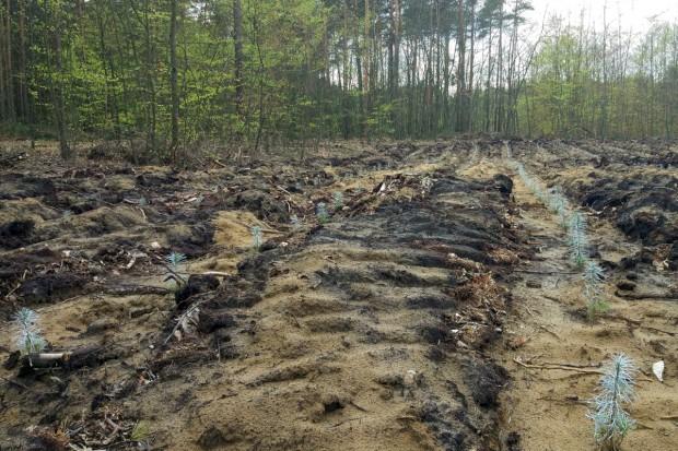 Lasy Państwowe: 500 zł mandatu za złamanie zakazu wstępu do lasu