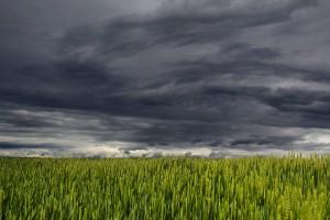 Straty w gospodarstwie – ARiMR może zwolnić z wykonania zobowiązania