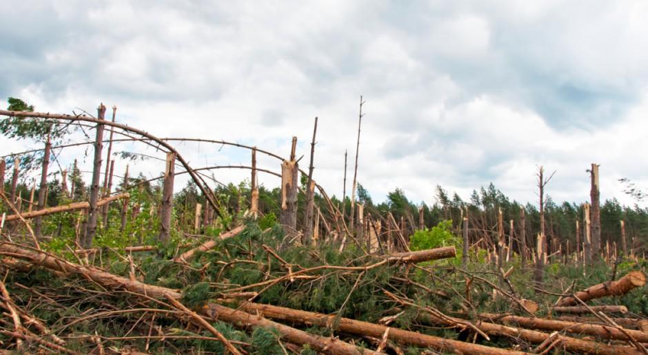 Lasy Państwowe: 40 tys. ha lasów do odnowienia, ok. 10 mln m sześć. połamanych drzew