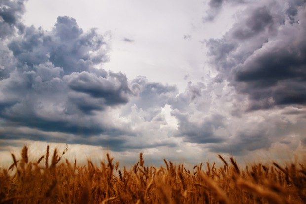 Rolnicy, którzy ponieśli straty w wyniku klęsk żywiołowych mogą składać w ARiMR wnioski o pomoc od 4 września