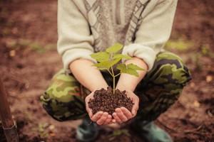 Kalisz: Właściciele zniszczonych prywatnych lasów dostaną pieniądze na sadzonki