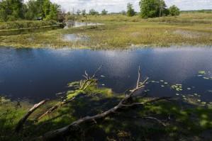 Podlaskie: Można kosić 6,3 tys. ha biebrzańskich łąk, ale jest mokro