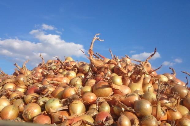 Crown 270 SL- przeciwko wyrastaniu cebuli oraz kiełkowaniu bulw ziemniaka