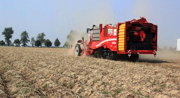 Największe jak dotąd pokazy zbioru ziemniaka - Krajowe Dni Ziemniaka w Kalinowej [zdjęcia]