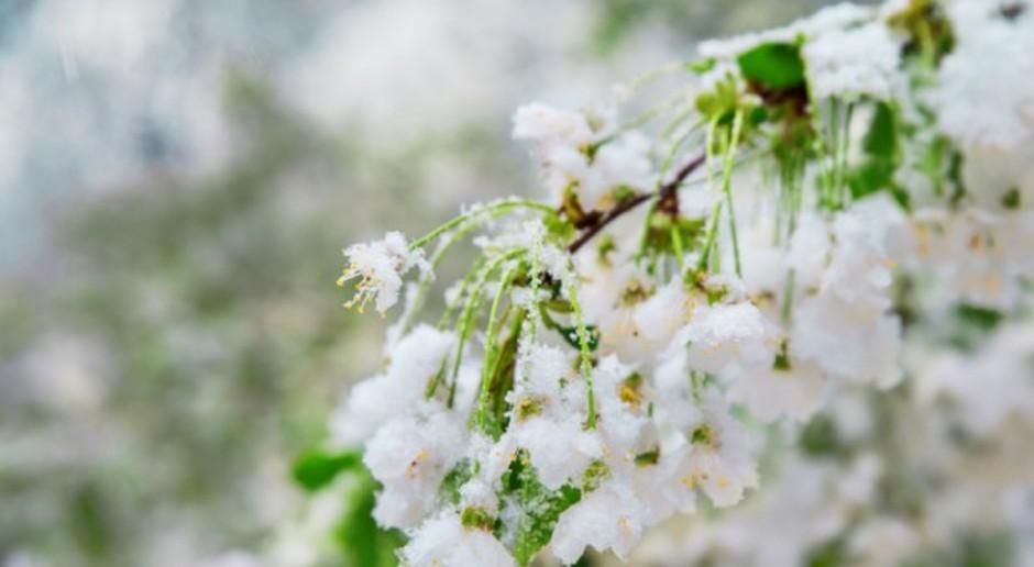 Pomoc dla poszkodowanych w wyniku wiosennych przymrozków