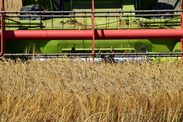 Minister Jurgiel o sytuacji na rynku zbóż