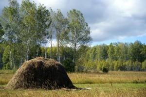 Rosja: Ponad 100 tys. chętnych na darmową ziemię