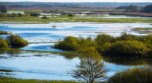 Nad Biebrzą koszono bagienne łąki dla przyrody