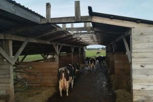 Tania obora - 3 tys. za stanowisko dla mlecznicy!