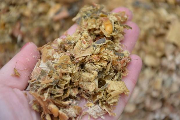 Koszenie i rozdrobnienie kukurydzy na kiszonkę