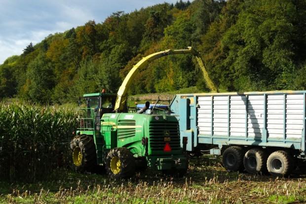 Jak poprawnie zebrać kukurydzę na kiszonkę?
