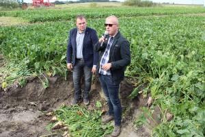 Maciej Czajkowski i Maciej Skwierz porównali plon z upraw buraka cukrowego uprawianego w technologii tradycyjnej i pasowej.