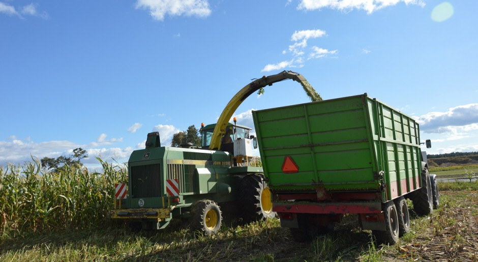 Wysokość koszenia kukurydzy na kiszonkę