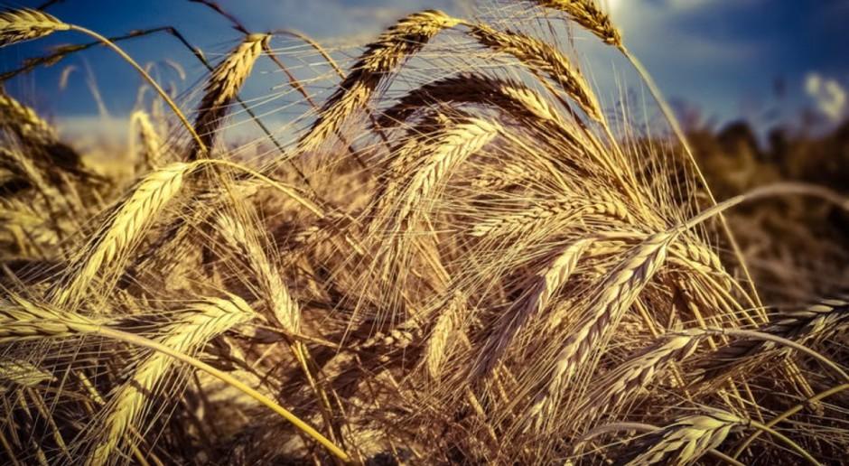 Leasing może wesprzeć gospodarstwa rolne