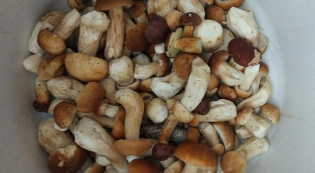 Bronisze: ceny jabłek o 50 proc. wyższe rdr; niskie ceny warzyw i grzybów